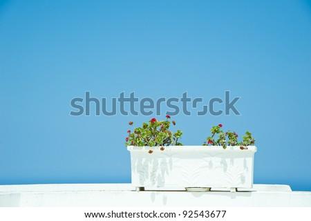 Flower pot on a traditional Greek house on Santorini island - stock photo