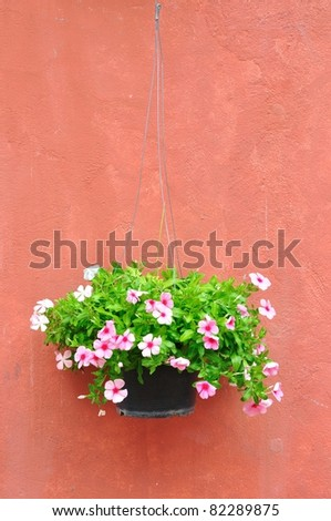 Flower pot with brown wall - stock photo