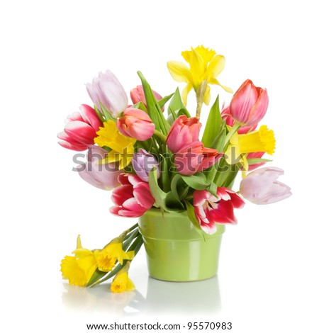 Flower pot with tulips and daffodils on white background - stock photo