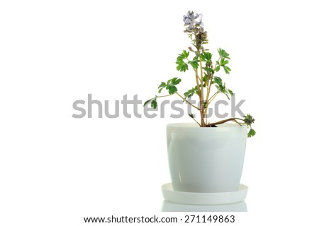 flower pots isolated - stock photo