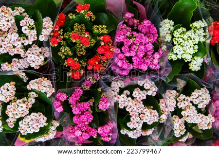 flower's bouquet from a florist - stock photo