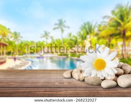 Flower, Single Flower, Spa Treatment. - stock photo