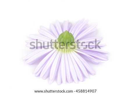 flower soft focus and light isoalted on white - stock photo