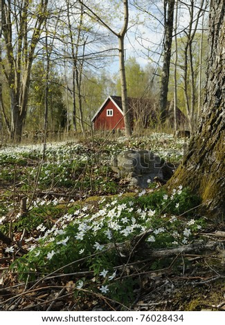 Flower spring meadow in Swedish park - stock photo