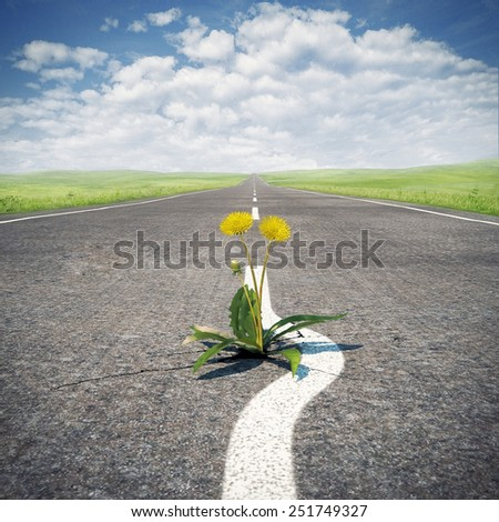 Flower sprouting through asphalt. Concept, save life. - stock photo