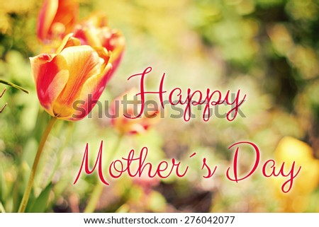 flower tulip greeting card background - happy mothers day - stock photo