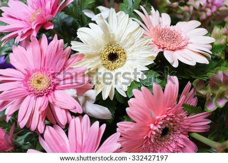 flower wedding decoration, beautiful gerbera flower blooming background - stock photo