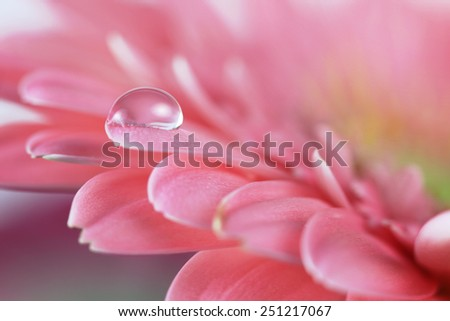 Flower with water drop. Soft focus. Made with macro-lens. - stock photo