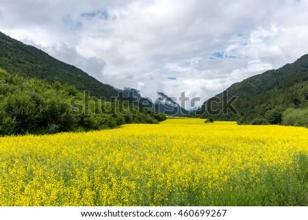 flower yellow - stock photo