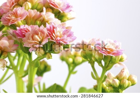 flowercloseup, houseplant, blooming, wallpaper, flowerpot, decoration, bud, potted, green, floral, tropical, white, spring, burgeon, pot, petal, floret, flower, leaf, botanical, bright, summer, - stock photo