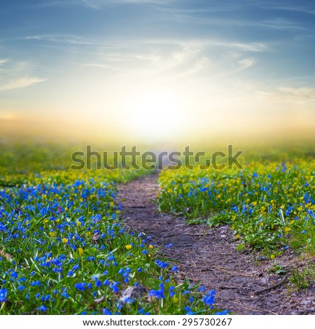 flowered field at the sunset - stock photo