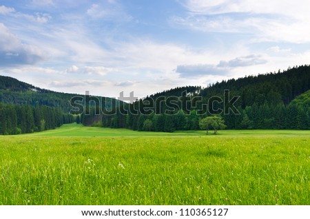 Flowered meadow, blue sky and forest - stock photo
