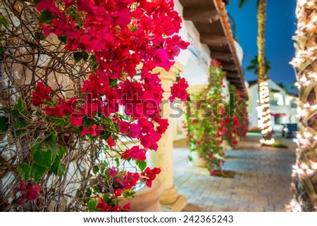 Flowering California. Beautiful Blooming Flowers in La Quinta. Winter in Coachella Valley, United States. - stock photo