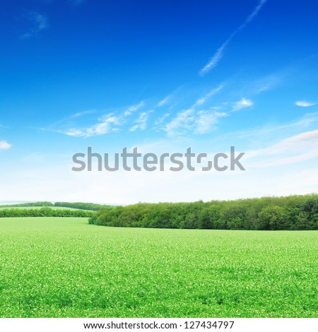 flowering field and a bright blue sky - stock photo
