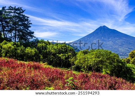 Flowering hillside & view of Agua volcano (Volcan de Agua) near Antigua, Guatemala, Central America - stock photo