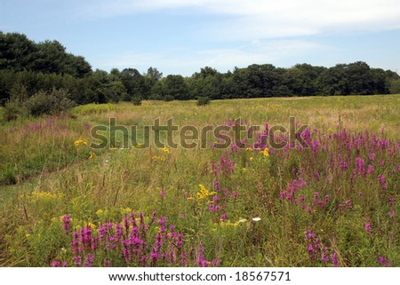 Flowering Meadow - stock photo