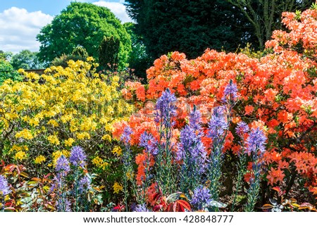 Flowering plants and shrubs in an English garden. - stock photo