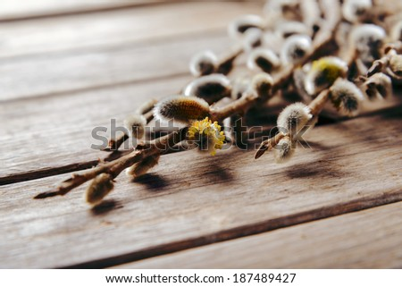 Flowering pussy willow branches on a wooden table - stock photo