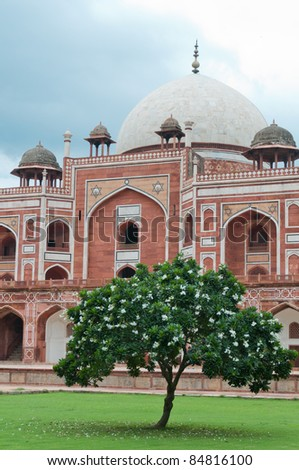 Flowering tree in front of Humayun's tomb in Delhi, India as an example of early Mughal architecture - stock photo