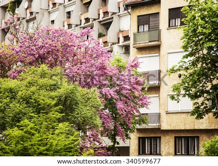 Flowering trees and residential building in Gyor, Hungary. Urban spring scene. - stock photo