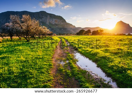 flowering trees at sunset in the mountains - stock photo