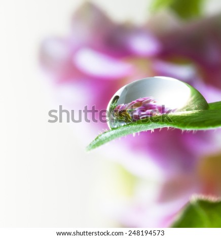 Flowers and dew drops on a leaf - stock photo