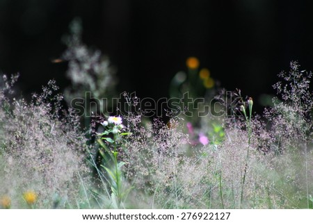 flowers and grass  - stock photo