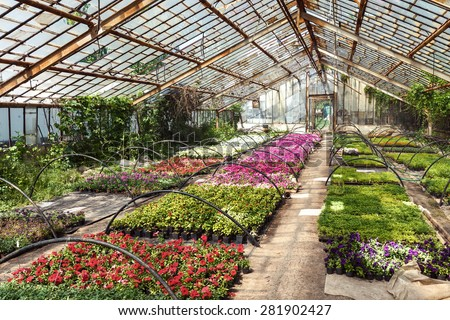Flowers and grass in greenhouse in spring - stock photo