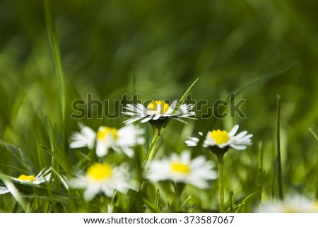 flowers and green grass background - stock photo