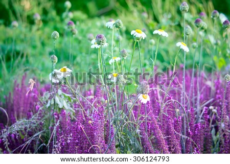 Flowers and herbs  with drops of morning dew on a meadow  - stock photo