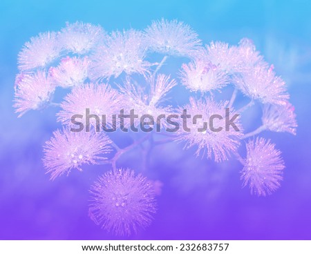 Flowers and leaves in pastel styles. - stock photo
