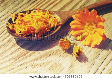 Flowers and petals of a calendula in a wooden spoon on a textural wooden surface. Medicinal flowers of a marigold. Beautiful summer background with yellow flowers - stock photo