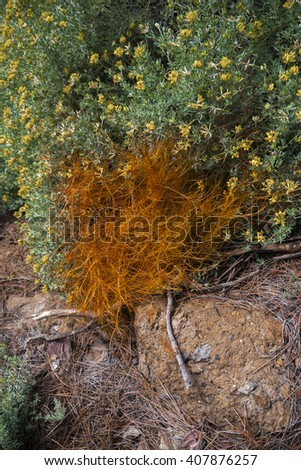 flowers and shrubs in the mountains - stock photo