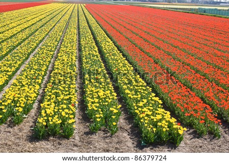 Flowers are blooming on the field - stock photo