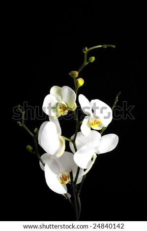 Flowers arrangement - stock photo
