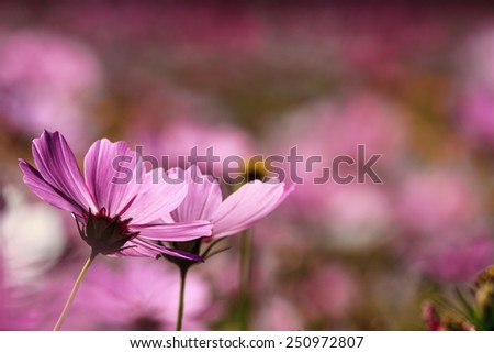 Flowers at sunrise for adv or otehrs purpose use - stock photo