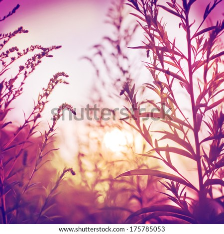 Flowers at sunrise/Vintage photo of wild flower in sunset/summer or spring landscape background - stock photo