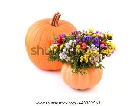 Flowers. Autumn flowers. Pumpkin vase and autumn flowers for holiday. Flowers and leaves. Autumn flowers and leaves on white. Autumn flowers isolated on white background. Flowers for autumn deco.  - stock photo