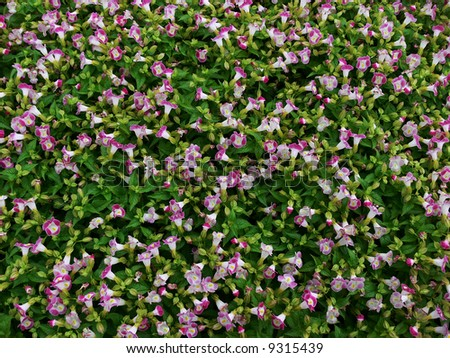 Flowers background - green fence - stock photo