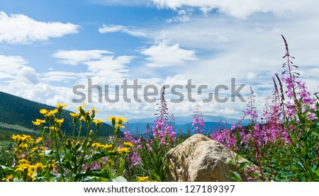 Flowers blooming in a Colorado Rocky Mountain Summer Landscape - stock photo