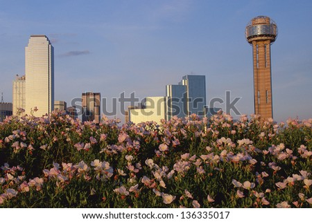Flowers blooming with Dallas skyline and Reunion Tower in the background, TX - stock photo