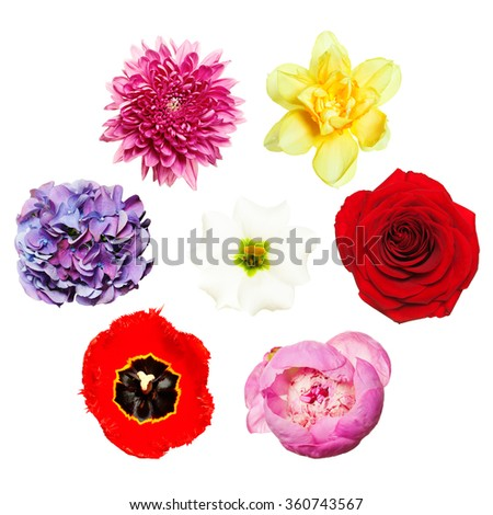 Flowers. Bright Colorful Set of Flowers. Top View - stock photo
