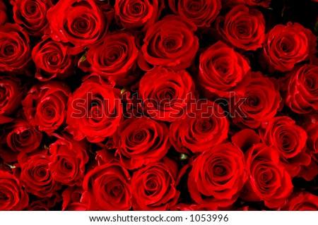 flowers' buds - stock photo