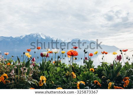 Flowers by the lake in Montreux, Switzerland - stock photo