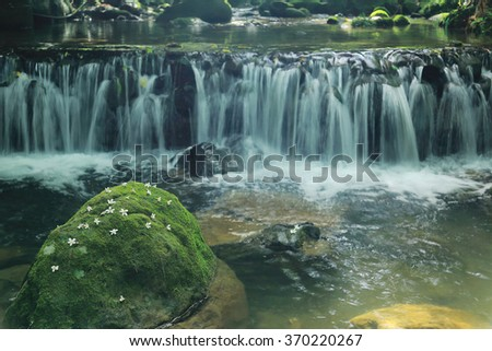 Flowers fallen on a mossy rock in the middle of a stream with lovely cascades (blurred background effect) ~ Beautiful river scenery of Taiwan in springtime ( close-up version) - stock photo