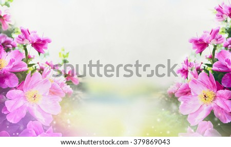 Flowers garden background with close up of pink peonies, banner - stock photo