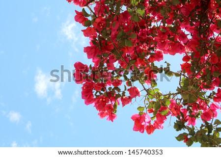 Flowers greece - stock photo