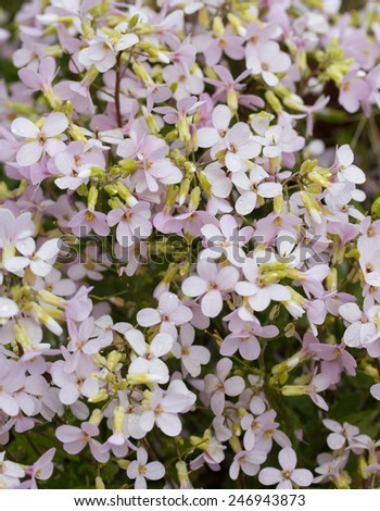 flowers in a garden - stock photo