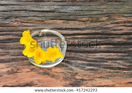 Flowers in ashtray on smoking. Tobacco day.  - stock photo