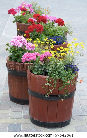 flowers in city - stock photo